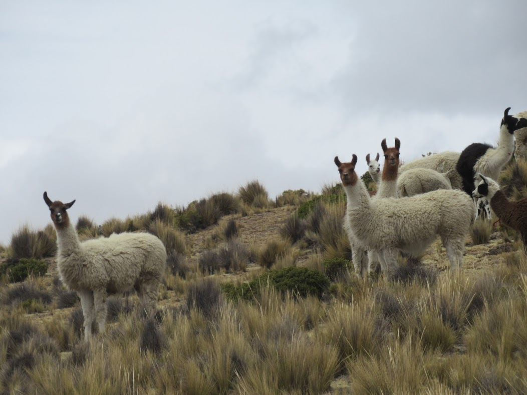 The Cultures and Vultures of Peru